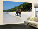 Indian Elephant (Elephas Maximus Indicus) Striding Along White Sand of Radhanagar Beach Wall Mural – Large by Astrid Schweigert