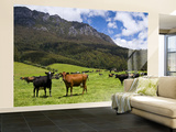 Cows in Lush Pastures and the Rocky Peak of Mt Roland Wall Mural – Large by Glenn Van Der Knijff