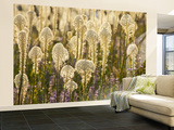 Beargrass and Lupine Backlit on the Slopes at Whitefish Mountain Resort, Whitefish, Montana, USA Wall Mural – Large by Chuck Haney