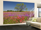 Spring Mesquite Trees Growing in Wildflowers, Texas, USA Wall Mural – Large by Julie Eggers