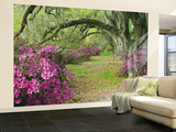 Oak Trees Above Azaleas in Bloom, Magnolia Plantation, Near Charleston, South Carolina, USA Wall Mural – Large by Adam Jones