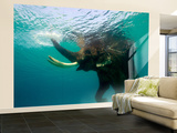Male Indian Elephant (Elephas Maximus Indicus) Swimming Underwater Wall Mural – Large by Astrid Schweigert