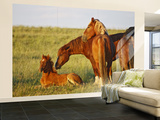 Feral Horse in the High Sagebrush Country East of Cody, Wyoming, USA Wall Mural – Large by Larry Ditto