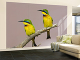 Two Little Bee-Eater Birds on Limb, Kenya Wall Mural – Large by Joanne Williams