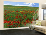 Naturalized Corn Poppies, Cache Valley, Utah, USA Wall Mural – Large by Scott T. Smith