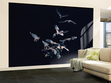 Pack of Spear Nosed Bats in Flight at Yale's Kline Biology Lab Wall Mural – Large by Nina Leen