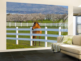 Horse Poses By Flathead Cherry Orchard Near Polson, Montana, USA Wall Mural – Large par Chuck Haney