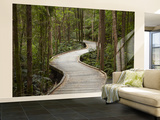 Boardwalk To Nelson Falls, Franklin - Gordon Wild Rivers National Park, Western Tasmania, Australia Wall Mural – Large by David Wall