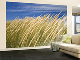 Beachgrass on Dunes of Binnalong Bay, Near St Helens Wall Mural – Large by Andrew Watson