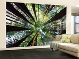 Arboleda Redwood Gran mural por Douglas Steakley