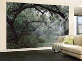 Oak Tree Forest after Storm Reproduction murale géante par Douglas Steakley