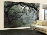 Oak Tree Forest after Storm Wall Mural – Large by Douglas Steakley