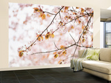 Cherry Blossums (Sakura) Near Shizunai Wall Mural – Large by Shayne Hill