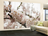 Cherry Blossums (Sakura) on Mount Hakodate Wall Mural – Large by Shayne Hill