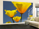 Yellow California Poppies (Eschscholzia Californica) Wall Mural – Large by Emily Riddell