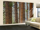 Pine Tree Trunks Wall Mural – Large by Douglas Steakley