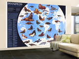 1987 Pinnipeds Around the World Map Wall Mural – Large