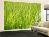 Rice Field, Near Can Tho, Mekong Delta Wall Mural – Large by Kimberley Coole