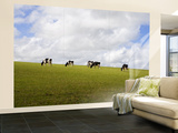 Friesian Dairy Cows Grazing Wall Mural – Large by Rodney Hyett