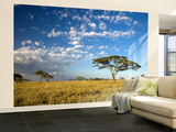 Acacia Trees under Blue Sky with Clouds Wall Mural – Large by Sean Caffrey