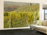 Vineyard Wall Mural – Large by Richard Nebesky