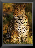 Leopard with Infant at Masai-Mara, Kenya Art by Michel &amp; Christine Denis-Huot