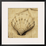 Scallop Prints by John Seba