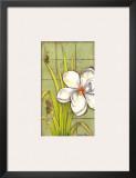 Sugar Magnolia I Posters by Jennifer Goldberger