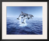 Dolphin Trio Prints