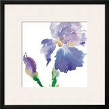Iris Prints by Summer Thornton