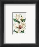 Blume des Tages – Magnolie Kunst von Jerianne Van Dijk