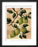 Italian Harvest, Limes Prints by Doris Allison