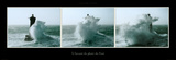 A l&#39;Assaut du Phare du Four Poster by Guillaume Plisson