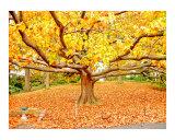 Herbstlaub und Baum Giclée-Druck von New Yorkled