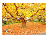 Autumn Foliage & Tree Giclee Print by New Yorkled