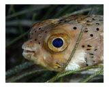Blue Eye Fotografie-Druck von  Manta Vision