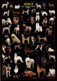 Dogs Poster by Lia Stein