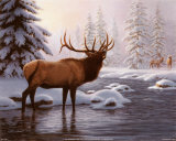 Elk II Prints by Richard Burns