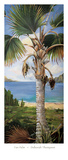 Fan Palm Prints by Deborah Thompson
