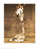Giraffe, First Kiss Art Print by Ron D'Raine