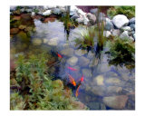 Garden Koi Pond Photographic Print by Elaine Plesser