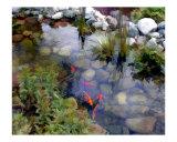 Garden Koi Pond Photographic Print by Elaine Plesser