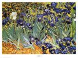 Iris Garden Plakat av Vincent van Gogh