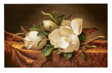 Magnolias on Gold Velvet Cloth Posters by Martin Johnson Heade