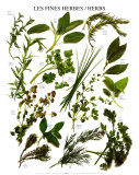 Mixed Herbs Prints