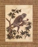 Affe in einem Baum I Poster von Dianne Krumel