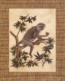 Monkey in a Tree I Print by Dianne Krumel