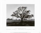 Ansel Adams - Oak Tree, Sunrise Umění