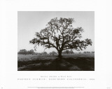 Oak Tree, Sunrise Prints by Ansel Adams