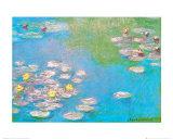 Nmphaeas 1908 Póster por Claude Monet